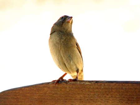 familiar: Little Bird