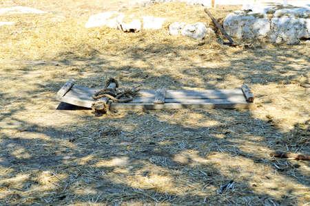 threshing: Threshing floor in Israel