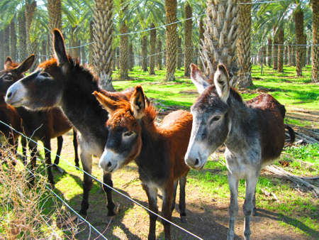 Local donkeys hired to mow the grass.