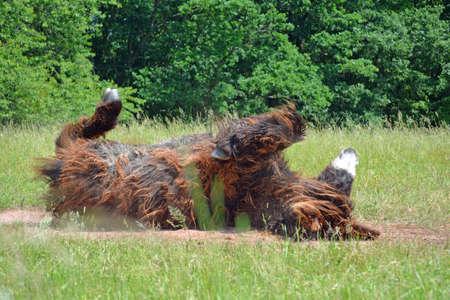 hairy legs: Beautiful Poitou Donkey in Southern Germany Stock Photo