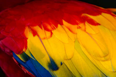 Feathers of the Macaw