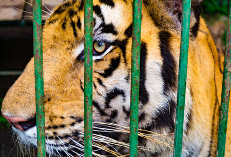Tiger Jail Stock Photo