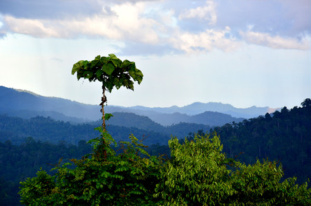 Scenic view of primary rain forest in lowland Danum Valley, Sabah Borneo, Malaysia.  One of the few primary rainforest around the globe.