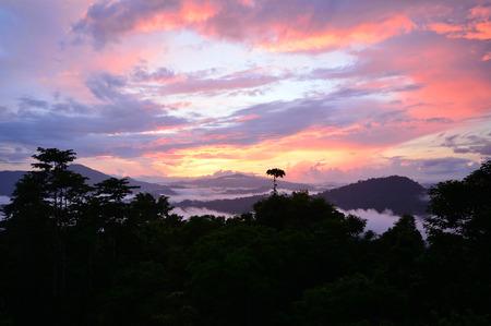 Primary rainforest sunrise scenery in lowland Danum Valley, Sabah Borneo, Malaysia. One of the few undisturbed primary dipterocarp rainforest around the globe.