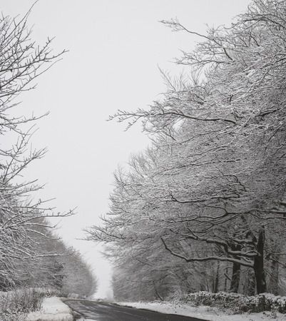 road in winter: Inverno strada con alberi