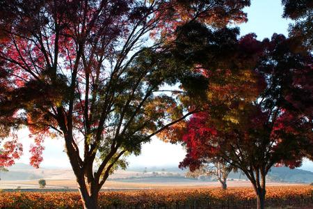 barossa: Autumn sunrise across the Barossa Valley South Australia Stock Photo