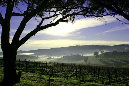 barossa: Sunrise across the Barossa Valley South Australia