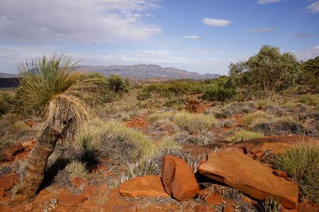 scrub grass: The desert landscape of the Flinders Ranges, South Australia