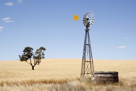 wheatfield: Wind driven water pump in a wheatfield  South Australia