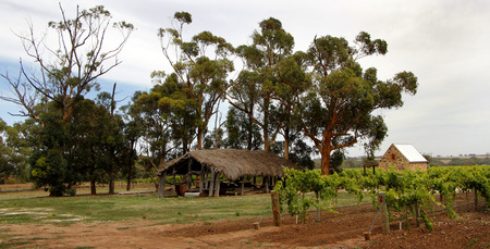 woodshed: An old woodshed amongst the vines in the Barossa Valley South Australia Stock Photo