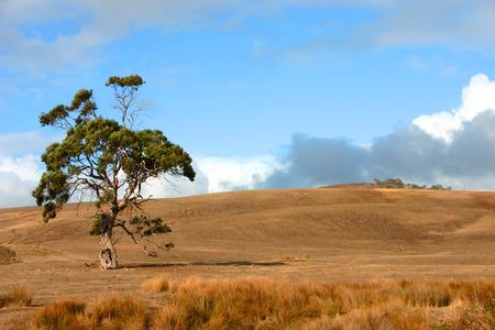 scrub grass: A tree on a hillside in South Australia Stock Photo