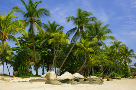 palm lined: A palm lined beach in the tropics