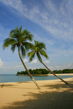 A palm lined beach in the tropics photo