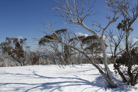 sun lit: Sun lit trees on a snow covered mountainside in Australia
