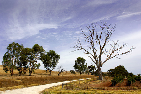 sunburnt: Sunburnt open country in South Australia