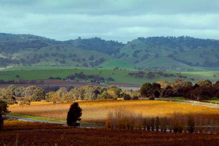 barossa: Rolling hills of the Barossa Valley South Australia Stock Photo
