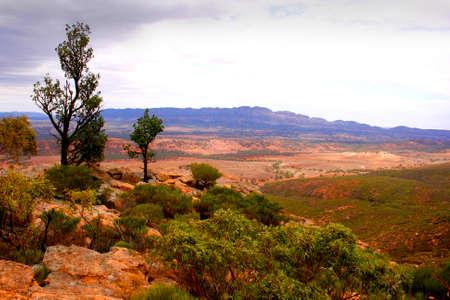 scrub grass: The desert landscape of the Flinders Ranges South Australia Stock Photo