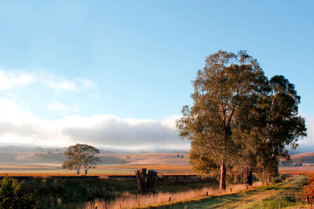 barossa: Autumn morning sunshine across the hills and vineyards in the Barossa Valley South Australia