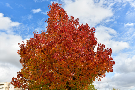 beautiful colors in the trees of the streets of Madrid 写真素材