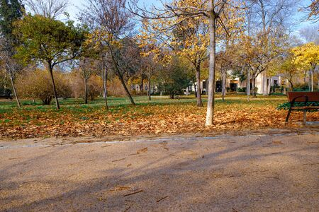 autumn in the trees and plants of the Retiro park in Madrid Stock fotó
