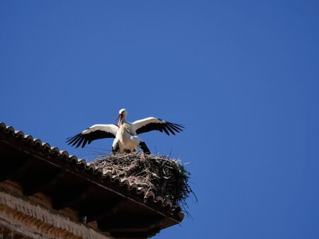 storks on the top of the church steeples in Castilla y Leon