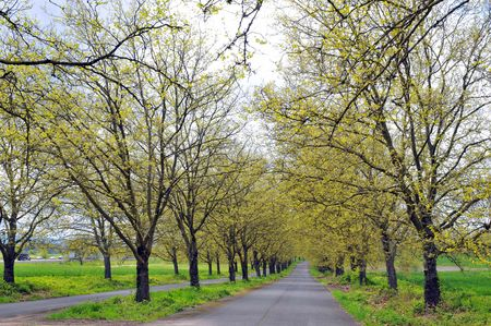 Road with yellow trees in spring afternoon Banco de Imagens