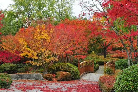 Brug in de rode esdoorn in de herfst