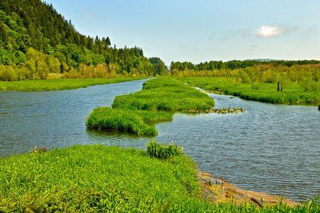 푸른 하늘과 녹색 식물 스톡 콘텐츠 - 5244859