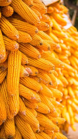 Corn cob Imagens