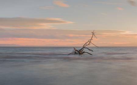 Dead tree in the lake Фото со стока