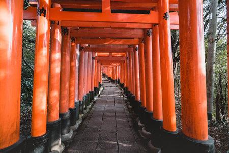 Fushimi Inari Shrine, Shrine, Torii, Fushimi Inari Shrine, shrine, Torii