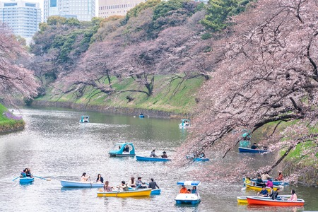 CHIYODA, TOKYO PREFECTURE, JAPAN - March 27, 2019: Visitors enjoying the scenario surrounded by Chidori-ga-fuchi Moat's cherry blossoms (sakura) on a rental boat ride.