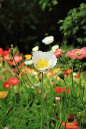 fleurissent en jardin