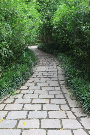 narrow bamboo garden path