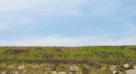 meadow background in sky
