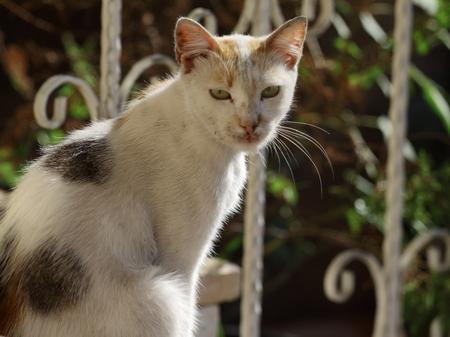 Cat sitting under the sunlight