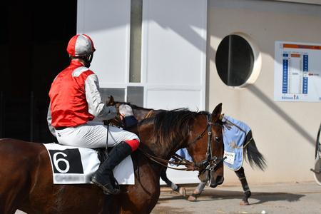 jockey on his horse Фото со стока