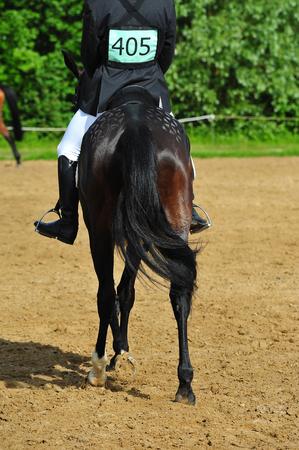 Horse contest Stock Photo - 112650749