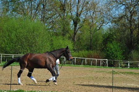 horse race training 版權商用圖片