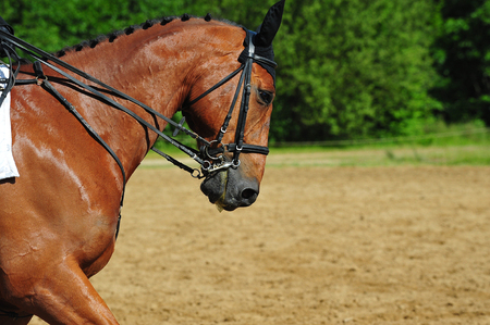 competition horse 版權商用圖片