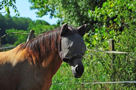 Horses head 版權商用圖片