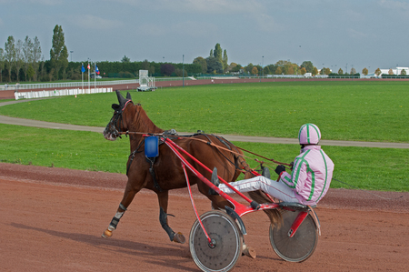 horse race in sulky Banco de Imagens