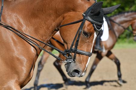 Horses head Stock Photo