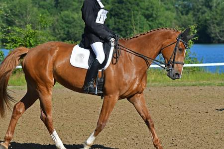 Horse contest