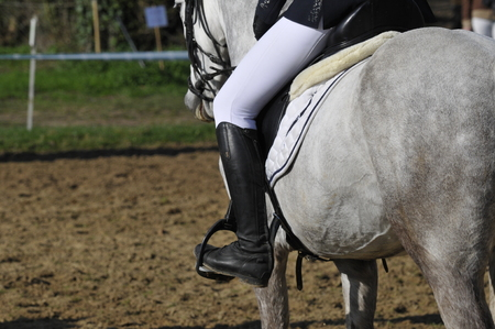 horse and his rider in horse show Stock Photo - 117353135