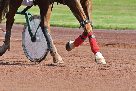 horse paws trotting