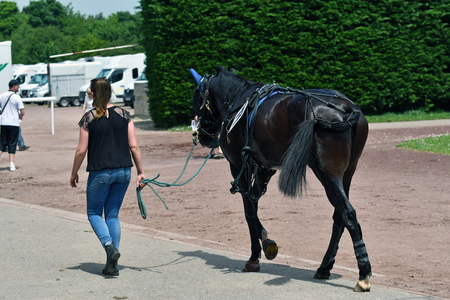racehorse and his trainer