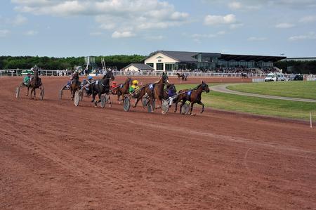 corsa di cavalli a sulky