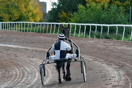 horse race in sulky Redakční