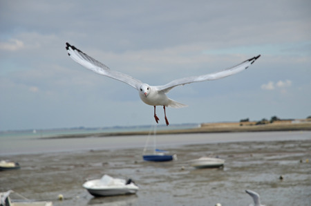 gull by the sea